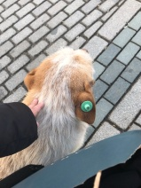 Dogs of Istanbul